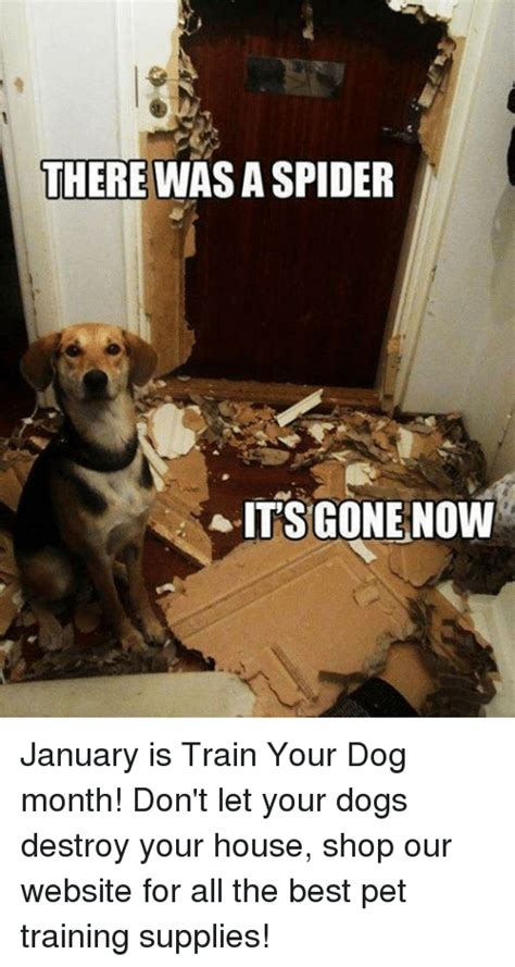 Freekibble Giveaway - 25 best memes about there was a spider its gone now there was a spider its gone now