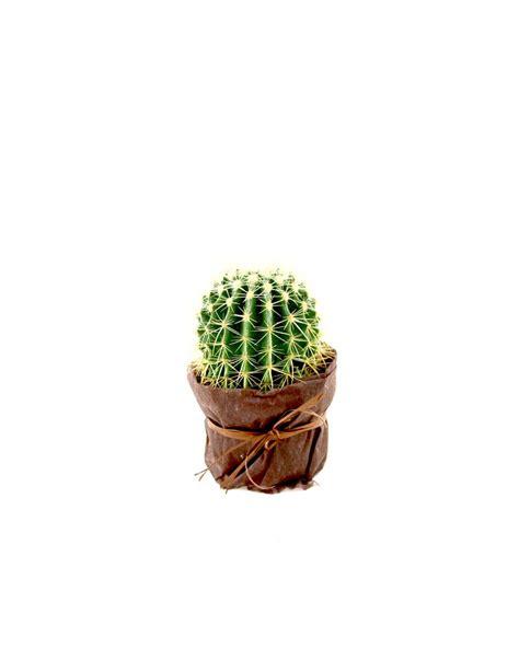 cuscino di suocera cactus cuscino della suocera tropical flowers