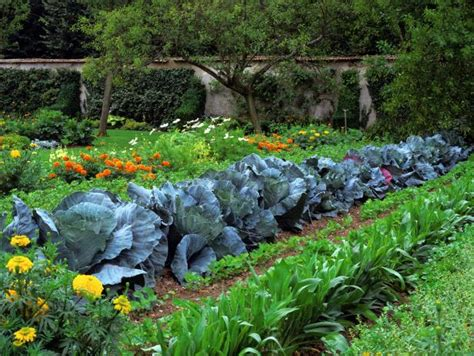 best vegetables for home garden vegetable garden design ideas hgtv