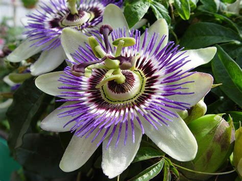 Bj 8873 Big Flower Top the best houseplants for with allergies nutrients
