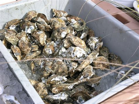 best oysters in cape cod 14 best the tabletop shop images on