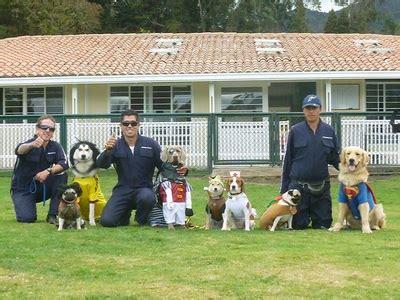 international dog house international dog house home