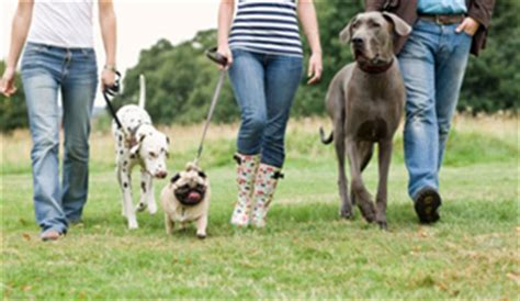 brucellosis in dogs dogs brucellosis cdc
