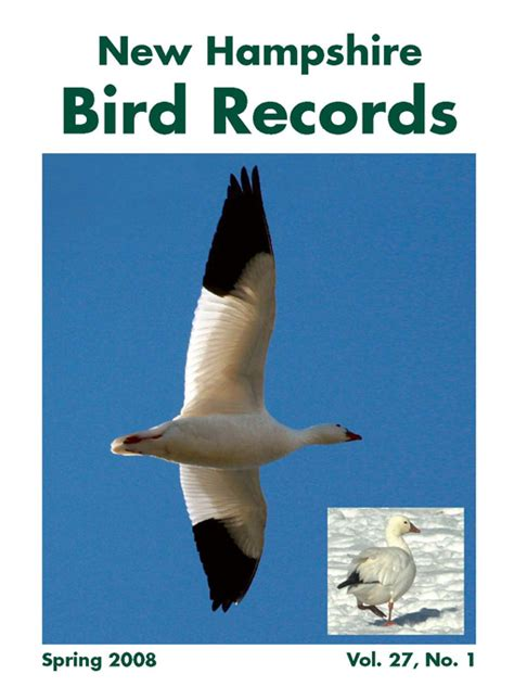 Nh Records New Hshire Bird Records Nh Ebird Nh Audubon