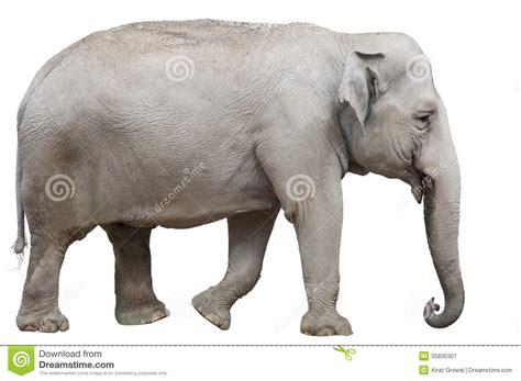 Isolated Asian Elephant Stock Image - Image: 35835301