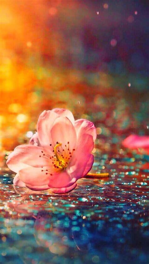 zedge imagenes de rosas 25 best ideas about sparkles background on pinterest