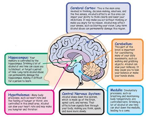 sections of the brain and what they control best 20 triune brain ideas on pinterest function of