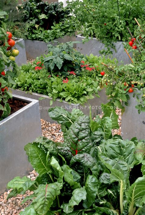 container garden vegetables container vegetable garden plant flower stock