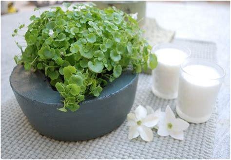 vasi bonsai fai da te vasi di cemento fai da te diy