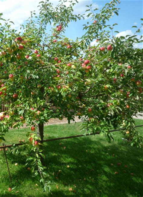 Was Kostet Ein Apfelbaum 2715 by Vhs Imkerei Kurs F 252 R Erwachsene In Bamberg Bienen Leben