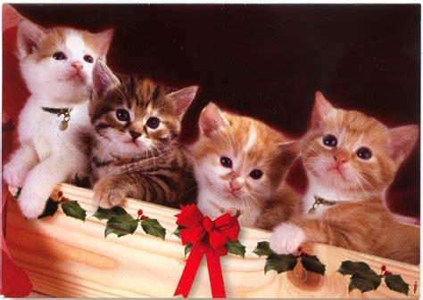 kitten cards kittens a greeting card marges8 s