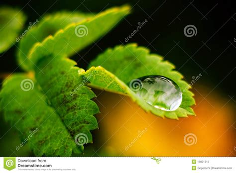 macro of water drop on human skin royalty free stock images image 25528569 macro drop of water royalty free stock photo image 15801915
