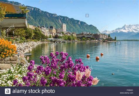 Geneva Flowers 8 flowers am quai des fleures montreux lake geneva