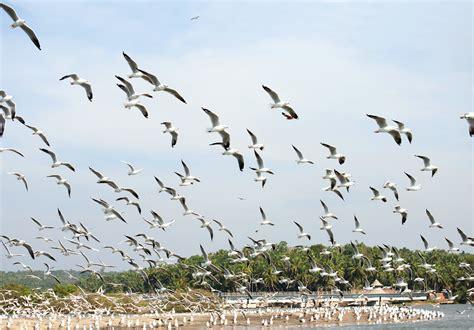 file kadalundi bird sanctuary jpg wikipedia