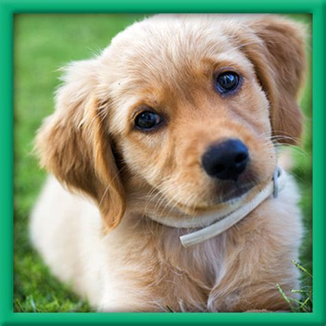 real puppies real puppy simulation by wavelength laboratories llc
