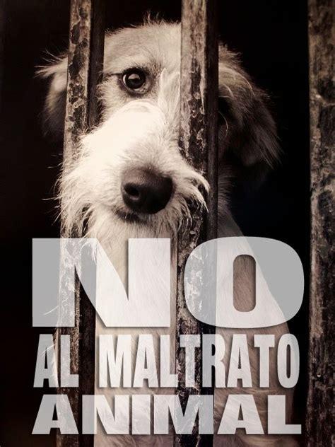 no maltrato animal no al maltrato animal prensanimalista