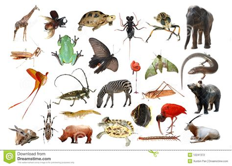 Animals Collection animal collection stock photography image 12241372