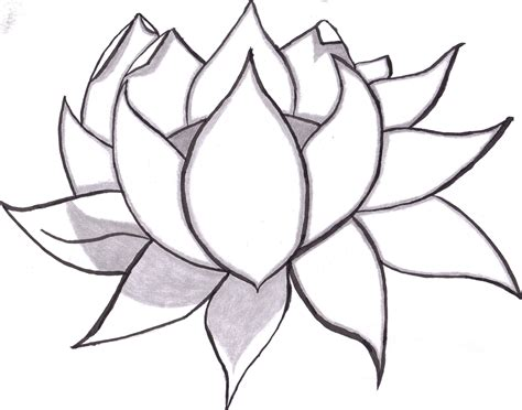 simple drawing learn to draw flowers of all kinds from simple daisies to