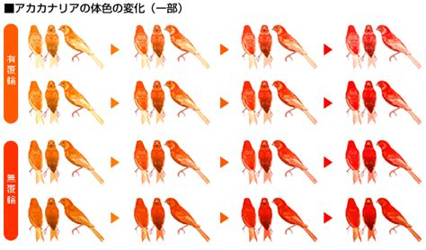 canary color canaries what colors can be pictures to pin on