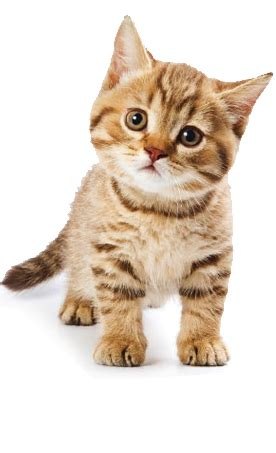 cat grooming, cat daycare, cat hotel | exmoor pet services