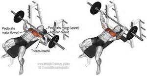 bench press barbell bench press exercise and
