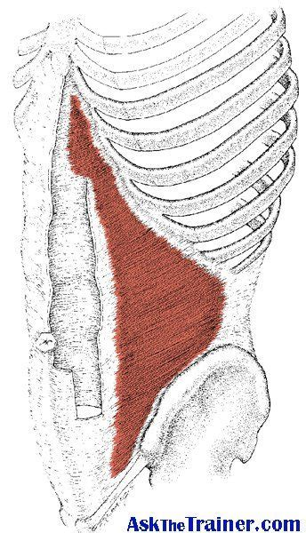 10 best anatomy images on anatomy workouts and planks