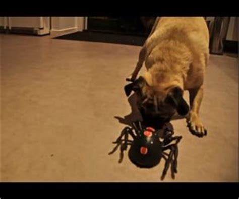robot pug pug vs robot spider from the coolest one