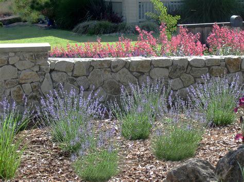 Image Gallery Lavender Landscaping Lavender Garden Ideas