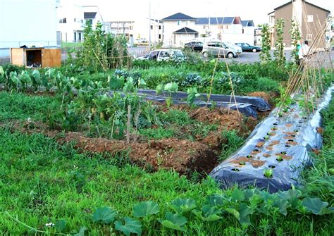 vegetable garden planner free vegetable garden planner free the garden inspirations
