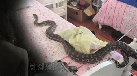 film manusia ular thailand seram wanita ini berubah jadi ular mengerikan saat