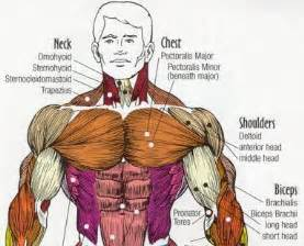 Benefits Of Incline Bench Targeting A Stubborn Chest Working The Pecs