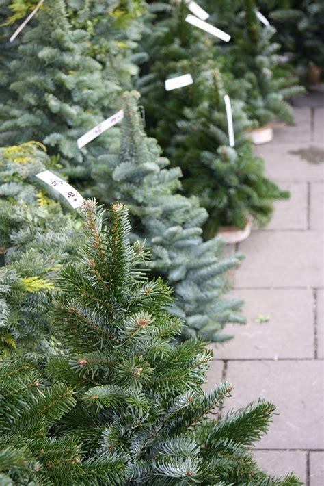 how to christmas christmas trees