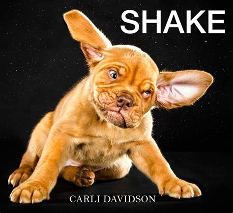 shake it shake it hilarious shake it shake it hilarious high speed photographs of dogs