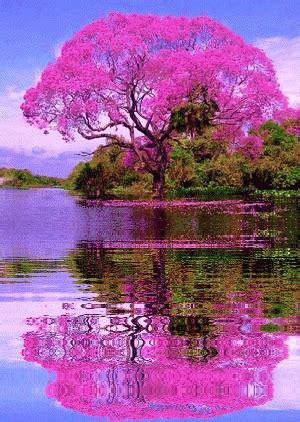 imagenes de arboles zen gif 193 rbol rosa reflejado en el agua gif 5201