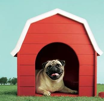 hutch pug vodafone india sports the global branding