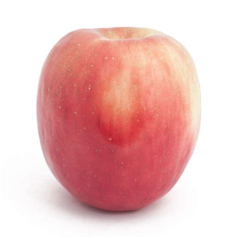 apple fuji bare root fuji red apple tree semi dwarf groworganic com
