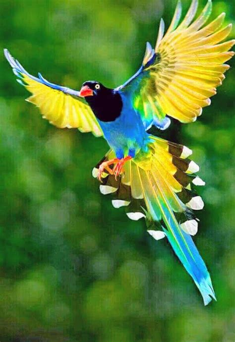 beautiful pictures of 25 best beautiful birds ideas on birds