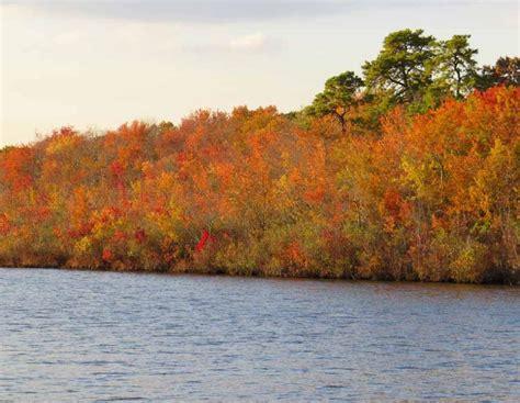 swan boats lakewood nj autumn in lake carasaljo in lakewood new jersey