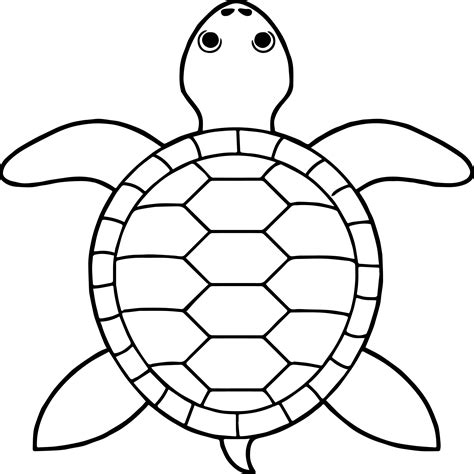 coloring book views tortoise turtle top view coloring pages wecoloringpage
