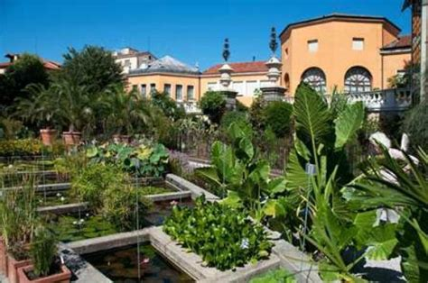 provided by the botanical garden orto botanico foto