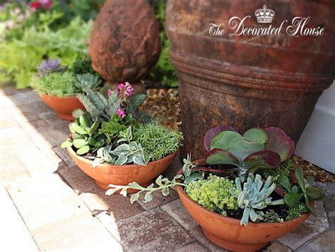 Succulent Dish Garden Ideas Dish Gardens Succulents And Terrariums Pinterest