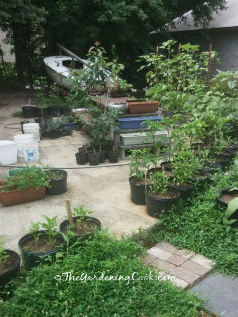 container vegetable gardens for small spaces the