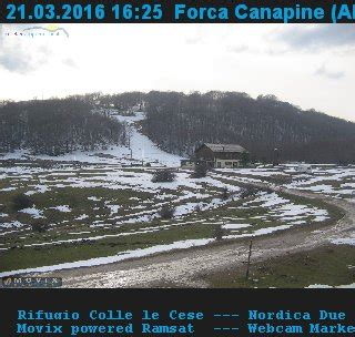 forca canapine web forca canapine