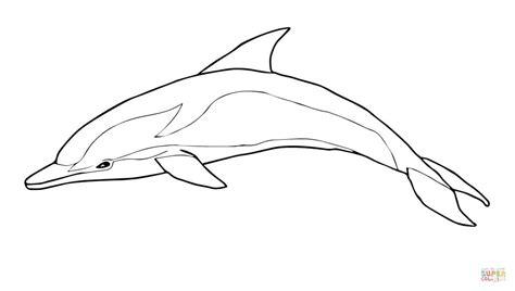 delphi zeichnen tutorial gem 252 tlich delphin vorlage ideen beispielzusammenfassung