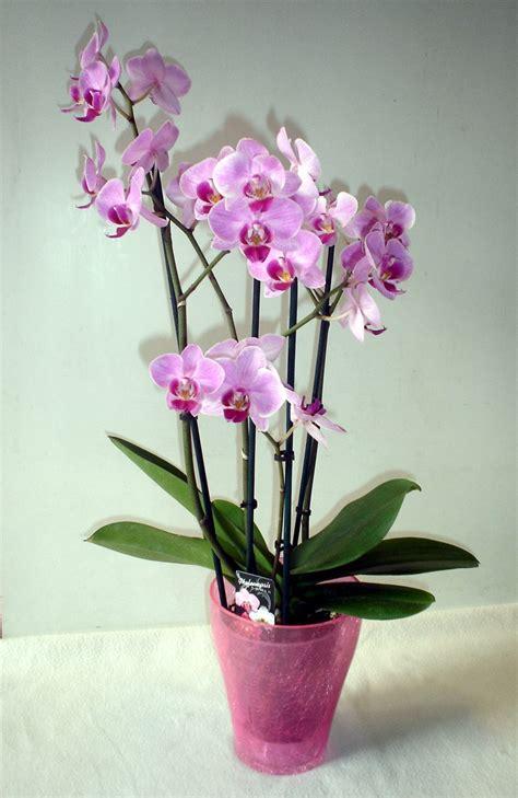 fiori in vaso da interno pianta da appartamento 4 idee anche per chi non ha il