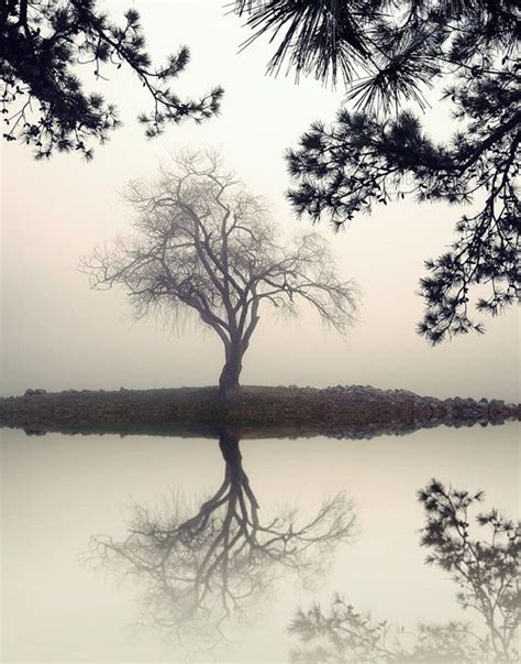 landscape photography black and white nature trees
