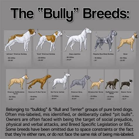 bully breeds the quot bully quot breeds pitbull