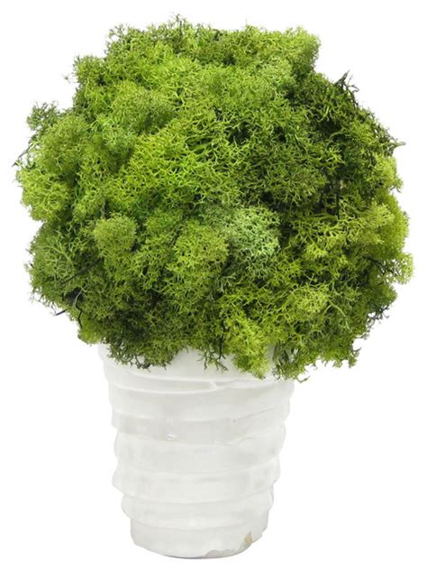 white ceramic vase reindeer moss topiary ball