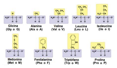 clasificacion de los aminoacidos segun sus cadenas laterales los amino 225 cidos lidia con la qu 237 mica