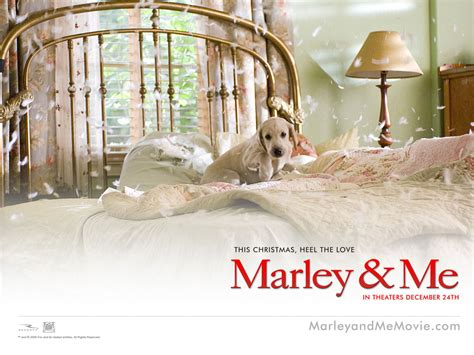 marley and me marley and me images marley me hd wallpaper and background photos 13563699